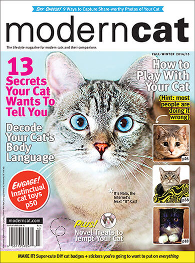 Latest issue of Modern Cat