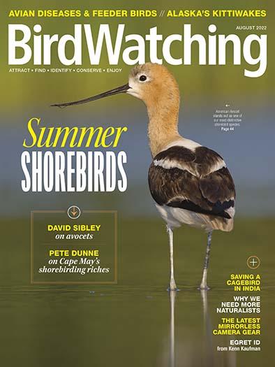 Best Price for Bird Watching Magazine Subscription