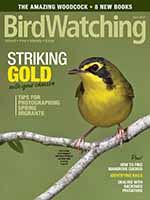 BirdWatching 1 of 5
