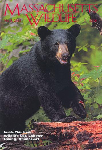 Best Price for Massachusetts Wildlife Magazine Subscription