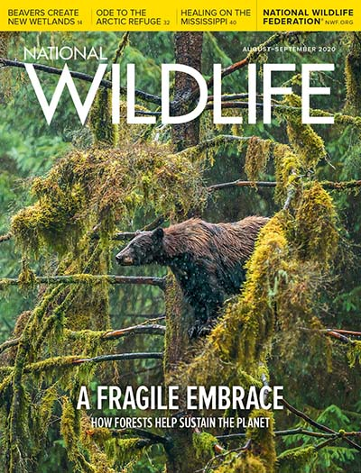 Latest issue of National Wildlife