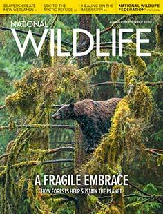 Latest issue of National Wildlife