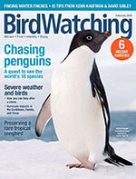 BirdWatching - 6 Issues