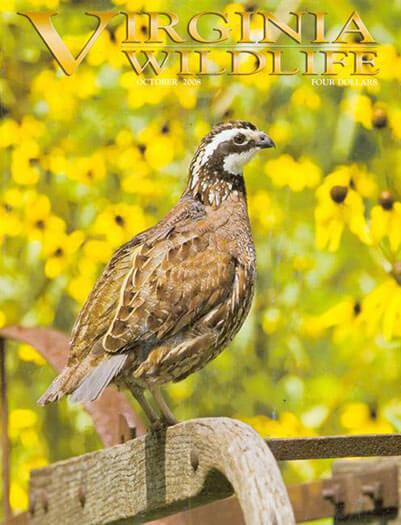 Latest issue of Virginia Wildlife Magazine
