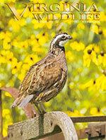 Virginia Wildlife 1 of 5
