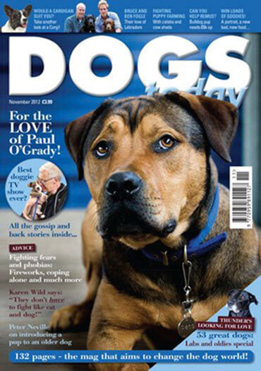 More Details about Dogs Today Magazine