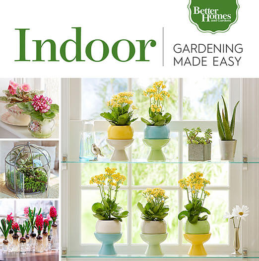 Cover of Gardening Made Easy: Indoor digital PDF
